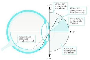 """<div class=""""Bildtitel"""">Die biologische Wirksamkeit </div>(melanopische Wirkung) des Lichts ist auch abhängig vom Einfallswinkel des Lichts in das Auge. Im melanopisch sensitiven Netzhautbereich befinden sich gehäuft die blauempfindlichen Rezeptoren ipRGC. [4]"""